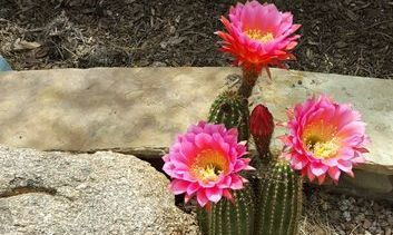 Desert Landscaping Company in Scottsdale